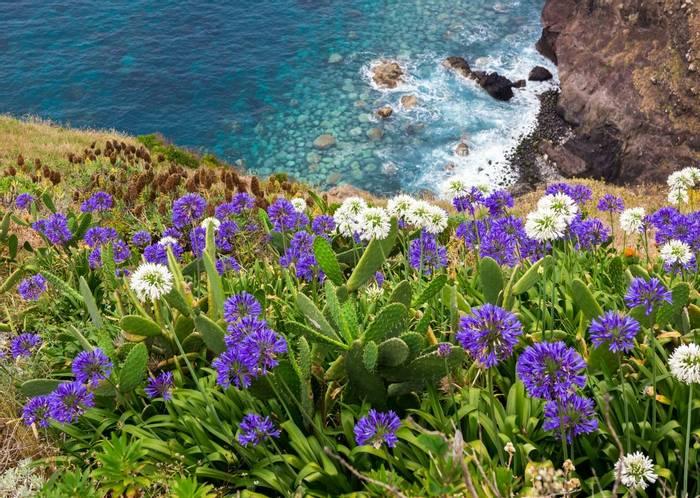 Wildflowers Madeira Shutterstock 296797166