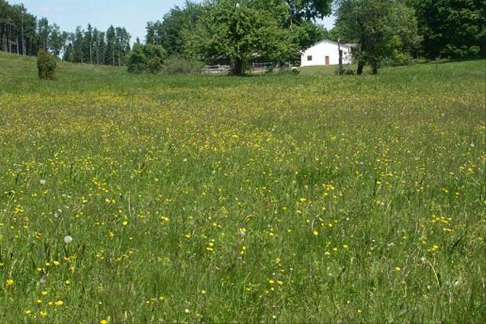 Wild flower meadow (Mr & Mrs McLennan)