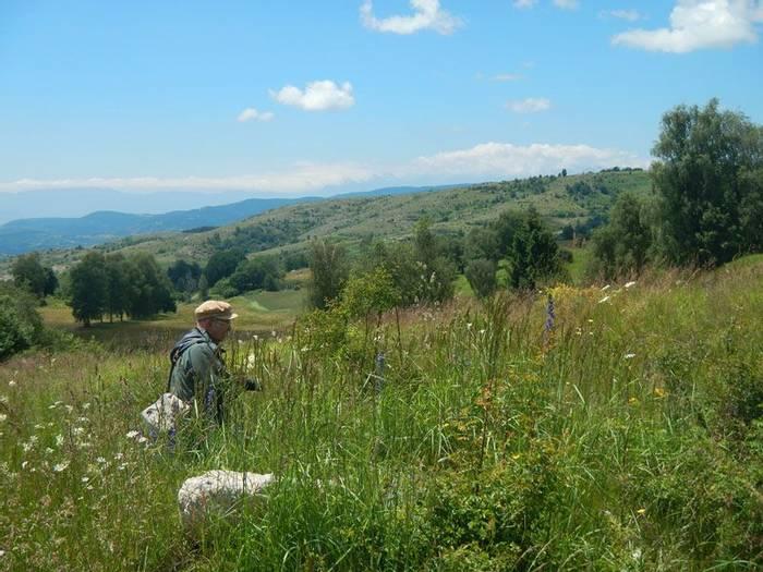 Botanising in Meadow (Andrew Cleave)