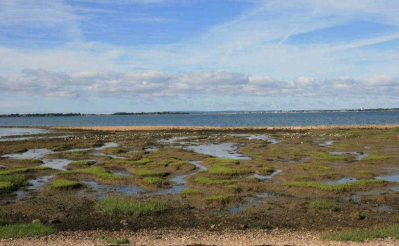 Hayling Billy Line View Over Oyster Beds towards Portsmouth.JPG