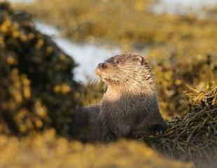 Ardnamurchan - Wild Scotland in Spring