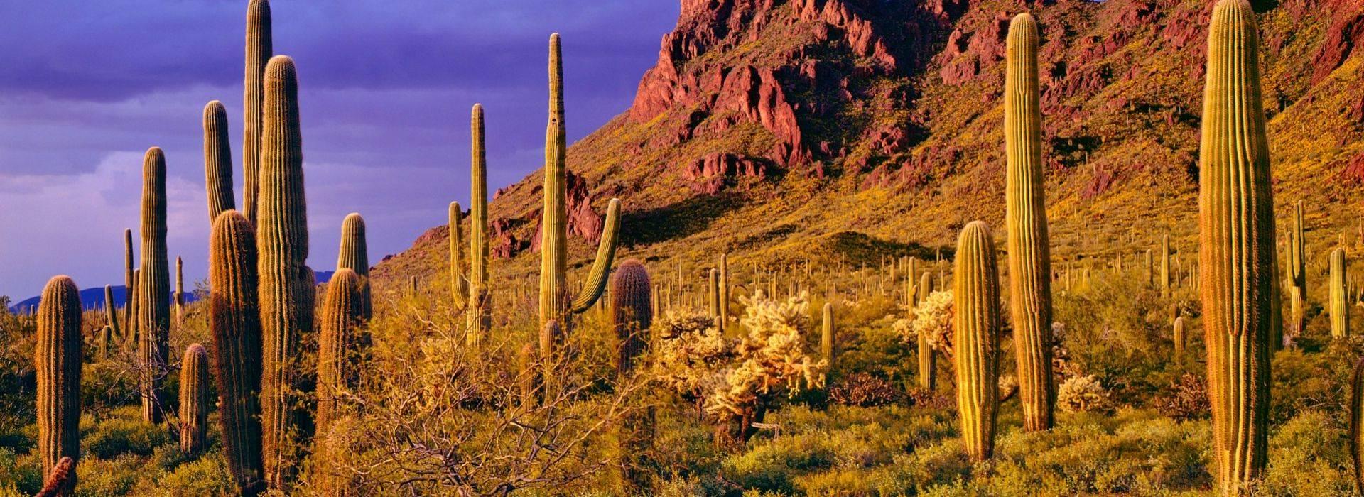 Arizona wellness vacations