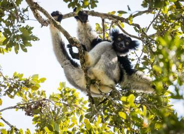 The Best of Madagascar