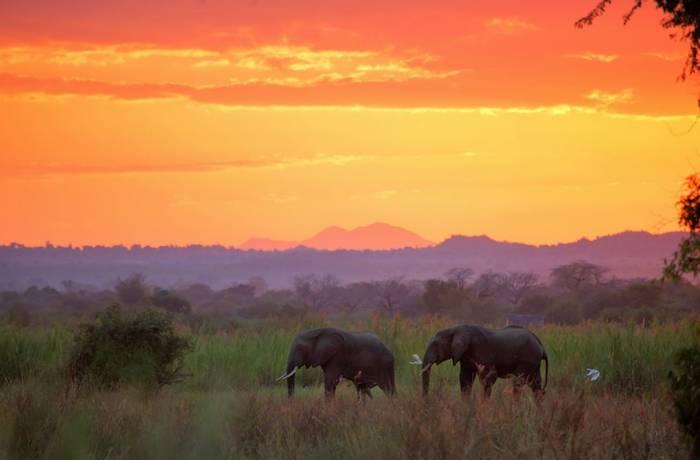Elephants, Liwonde National Park, Malawi shutterstock_692481478.jpg