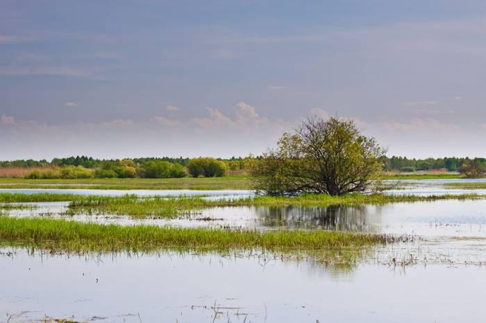 Biebrza swamps, Poland.