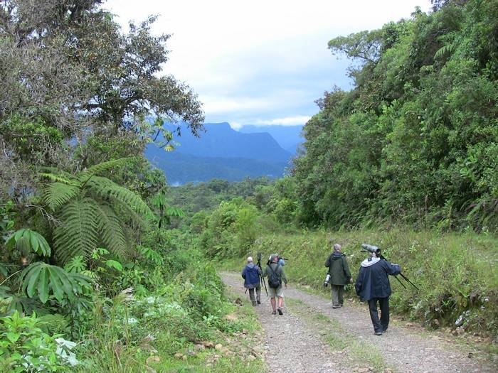Cloud forest, Cochabamba (Mike & Maryilyn Burge)