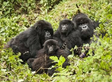 Uganda - Mammals and Mountains
