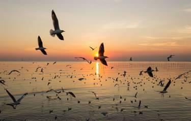 Wildlife - Sea Birds - AdobeStock_98215679.jpeg