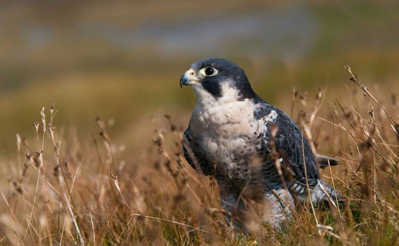Wildlife - Whitby - AdobeStock_26284854.jpeg