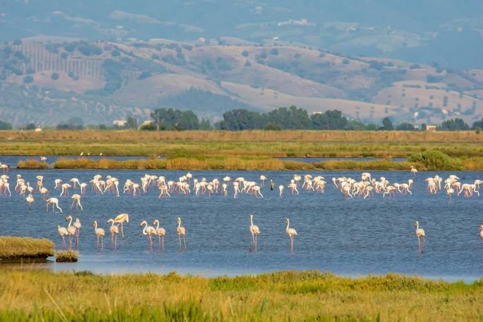 Flamingo, Tuscany, Italy shutterstock_1481512649.jpg