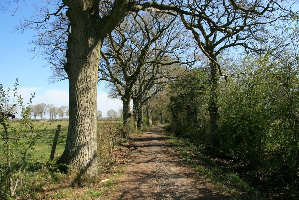 Footpath from Thakeham en route to Knepp Estate.JPG