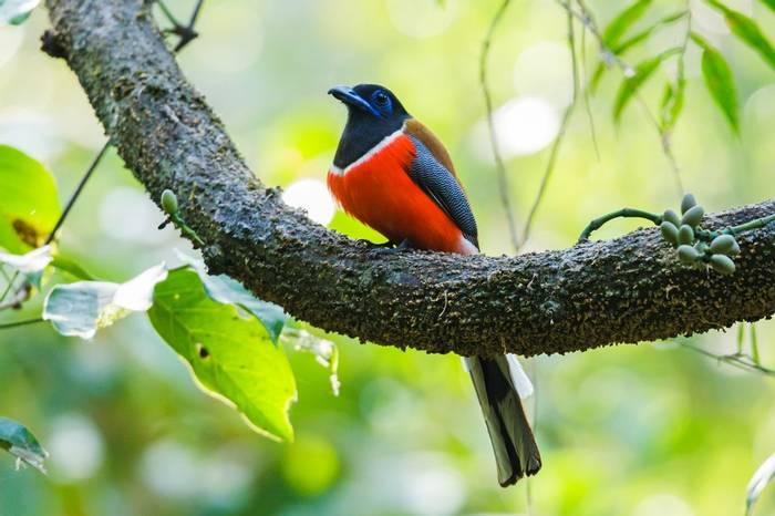 Malabar Trogon Shutterstock 1091308070