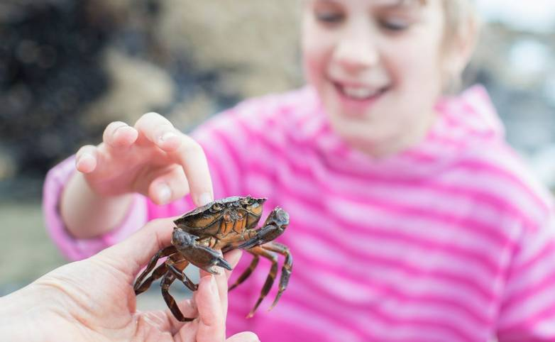 Young Girl Touching Crab Found In Rockpool On Beach