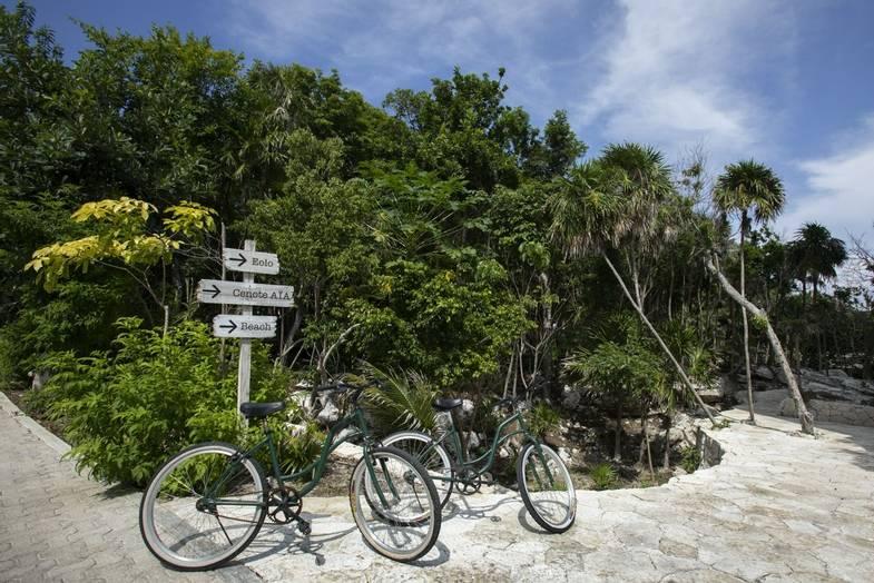 Palmaia-work-remote-bikes.jpg
