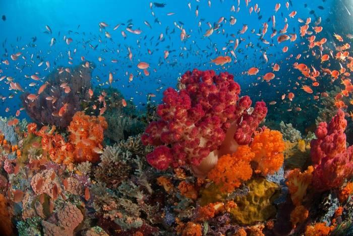 Raja Ampat reef