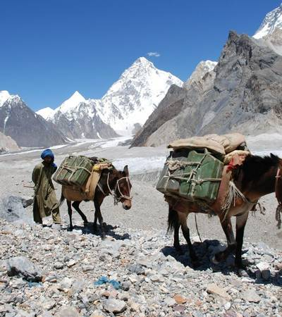 Army mules on trail descending to Concordia