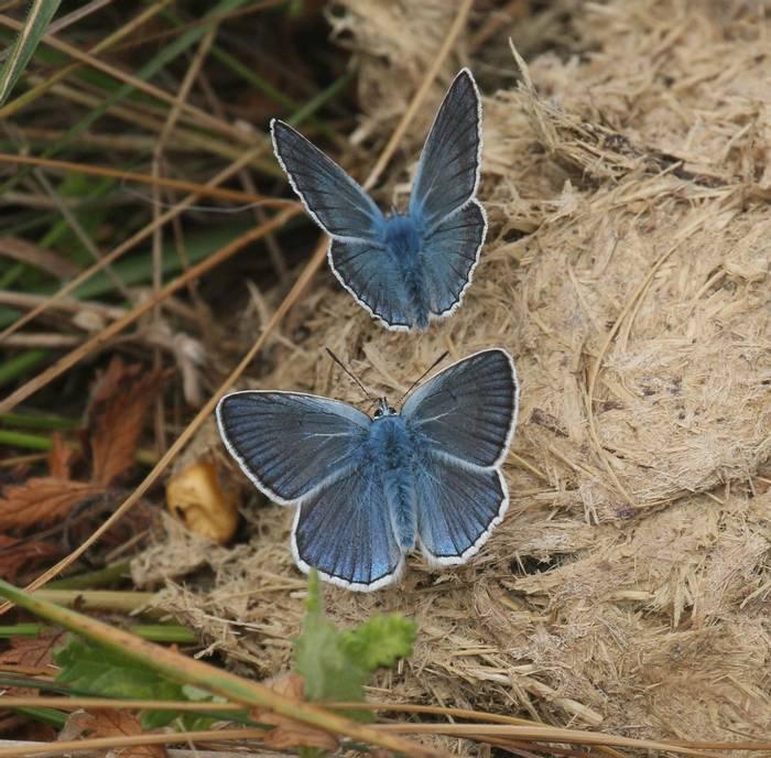 Amanda's Blue (Andy Harding)