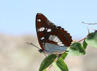 The Butterflies and Birds of Macedonia
