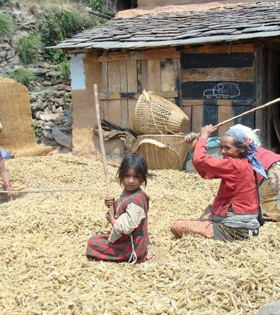 Threshing wheat in Dharapani village (1,400m)