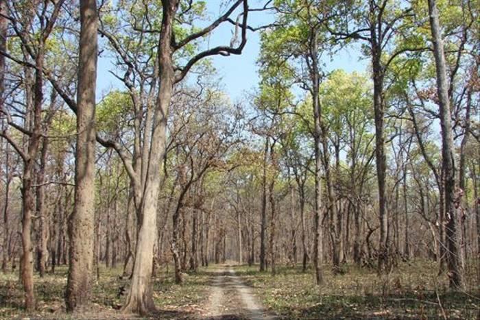 Track through Suklaphanta