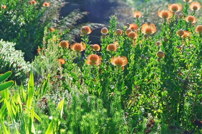 Kirstenbosch Botanical Gardens, Cape Town, South Africa Shutterstock 155091257