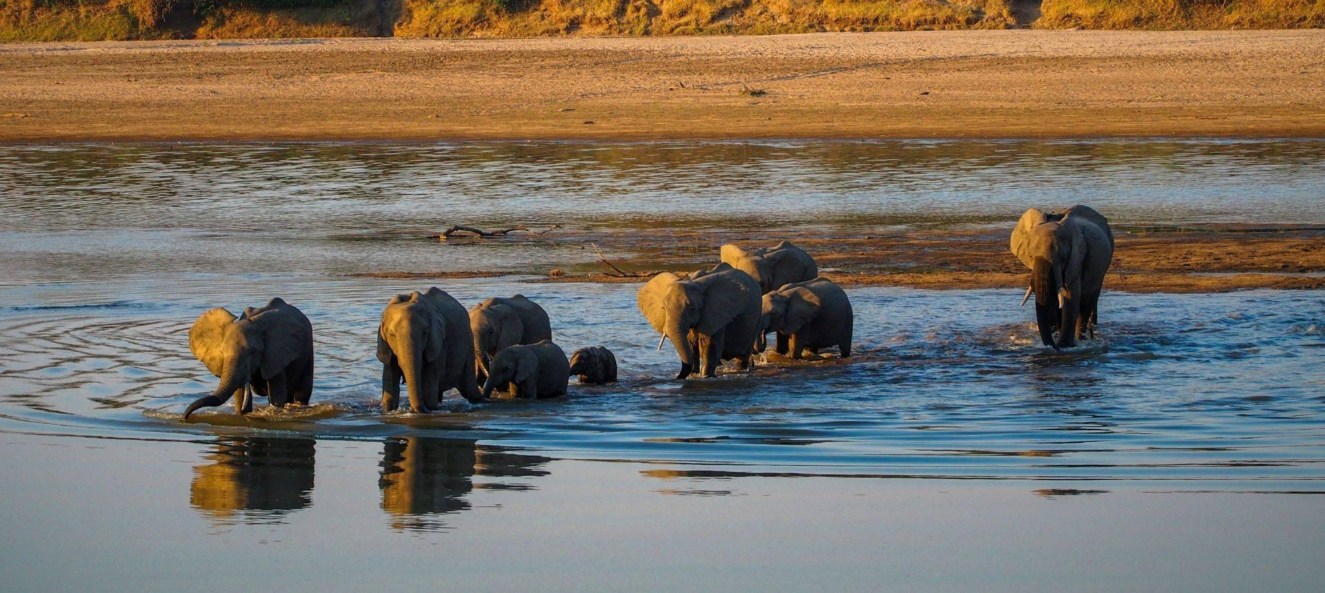 Elephants, South Luangwa, Zambia Shutterstock 570715432