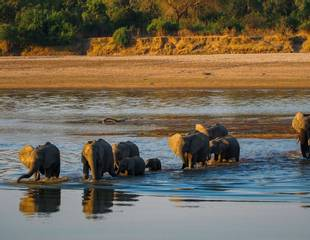 Zambia's South Luangwa National Park - Nkonzi Camp