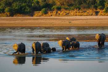Elephants, South Luangwa, Zambia Shutterstock 570715432