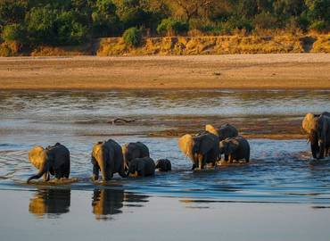 Zambia's South Luangwa National Park - Nkonzi Camp