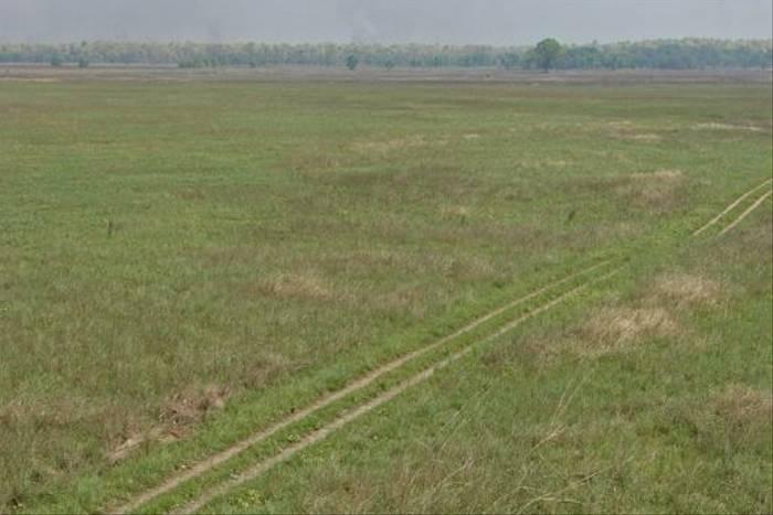 Suklaphanta grasslands