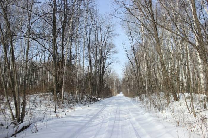 Road Through The Forest In Durminskoye