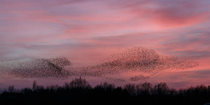 Starlings Somerset Shutterstock 181616192