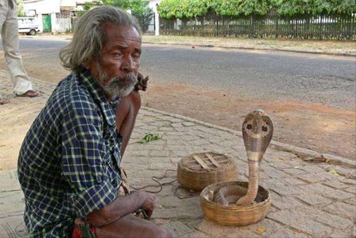 Snake Charmer (Tim Melling)