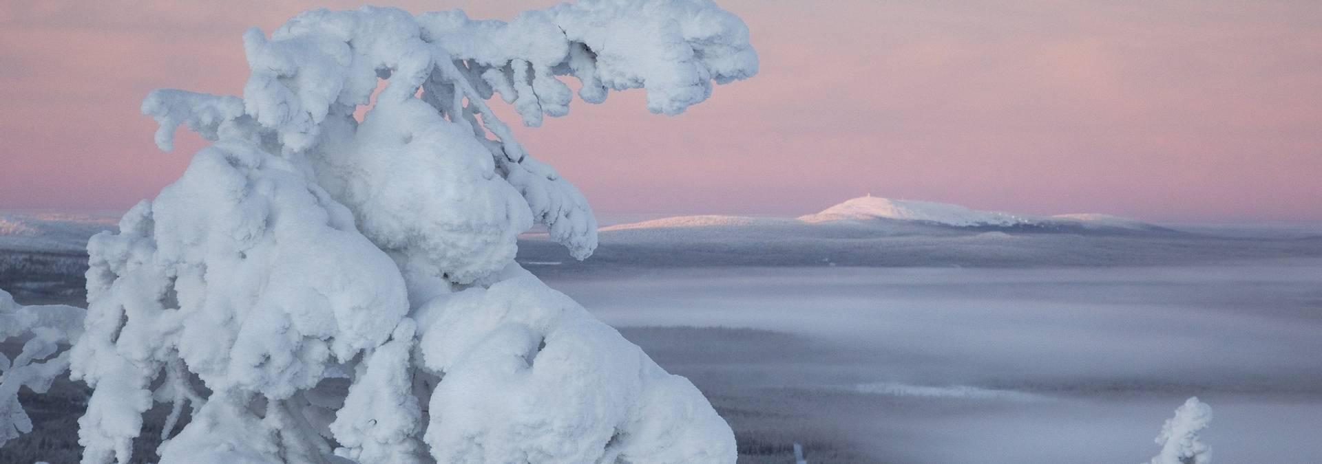 Pyhä_Luosto_National_Park_Finland RESIZED Credit Tea Karvinen.jpg