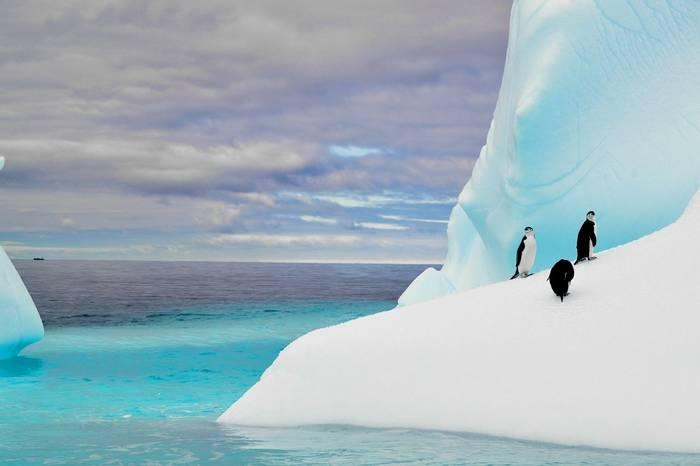 Chinstrap Penguins, Antarctica Shutterstock 363852626