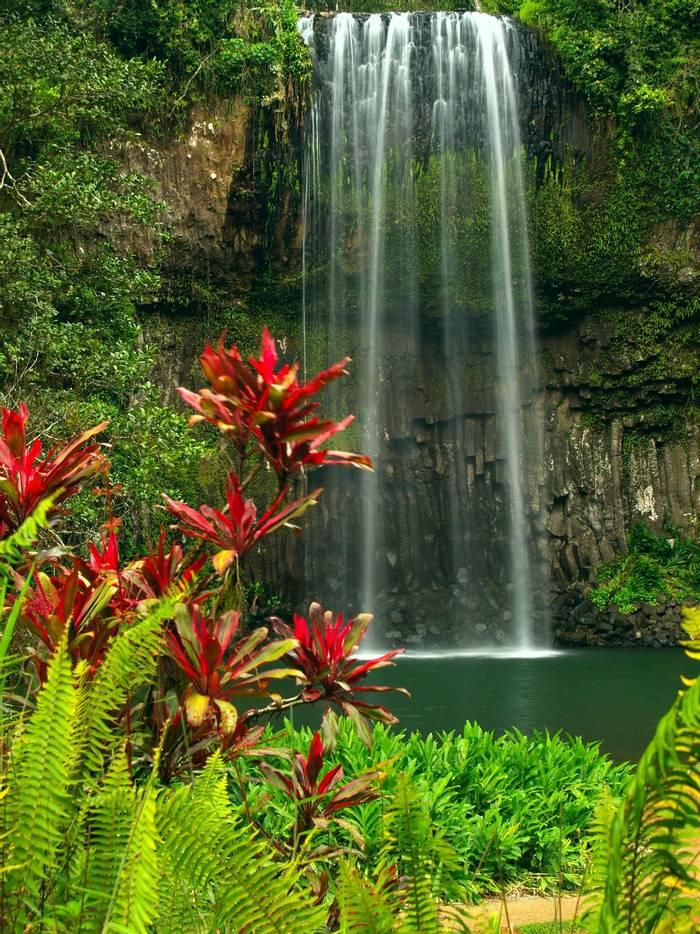 Millaa Millaa falls in Queensland Australia. shutterstock_17862574.jpg