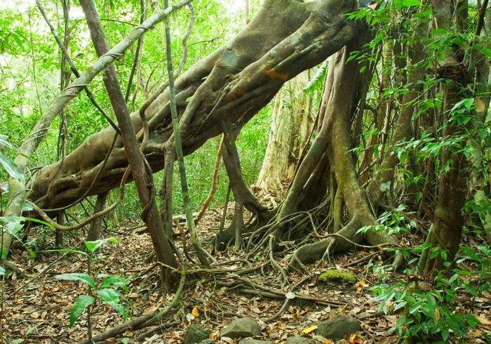 Jungle, Cat Tien National Park, Vietnam shutterstock_154185188.jpg