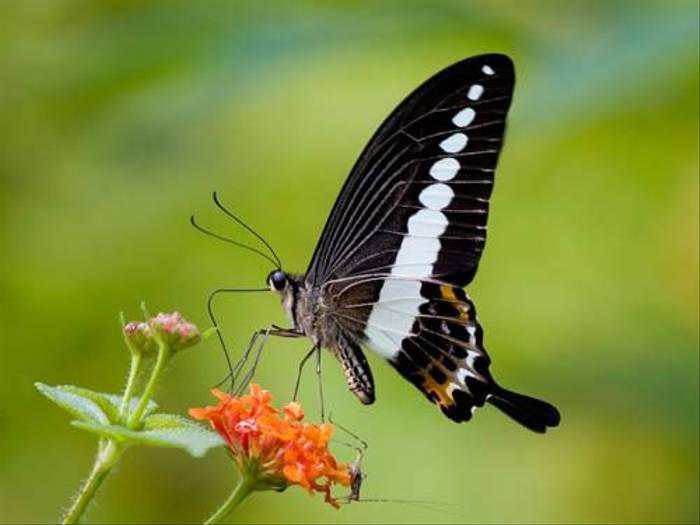 Butterfly species (Mike Galtry)