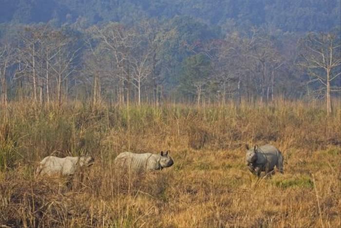 Rhinos in Chitwan National Park (Cliff Garratt)