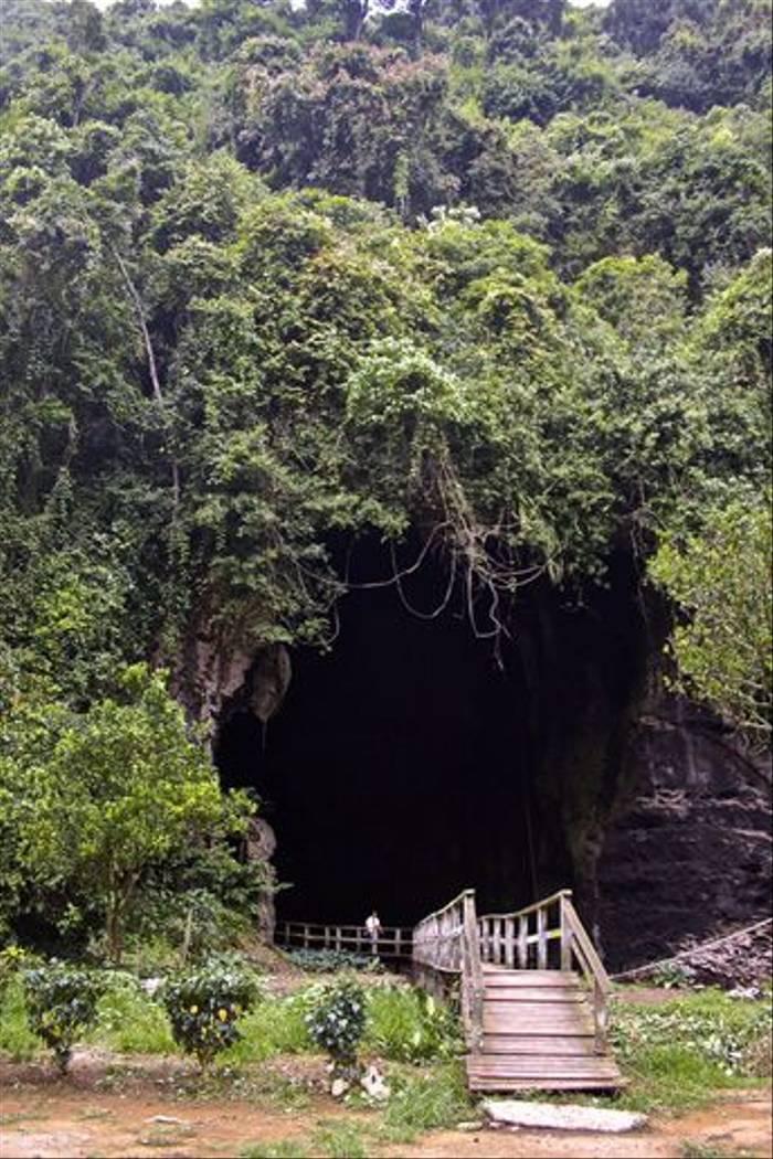 Gomantong Caves (Dani Free)