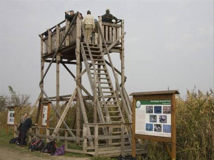 Tower hide (Malcolm Stott)