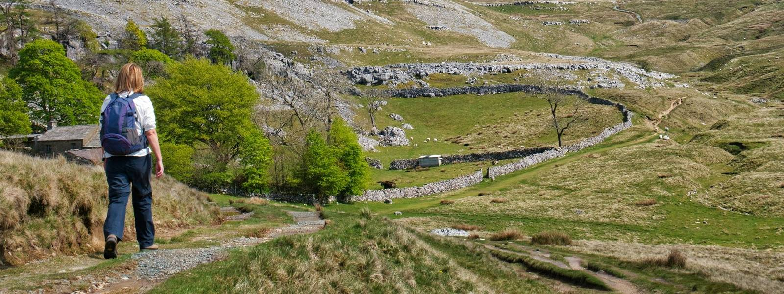 A single walker on the path by Crina Bottom, heading for Ingleborough, in the background, in the Yorkshire Dales, UK