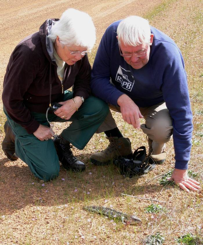 Philip & Sally with a Bobtail Lizard (Peter Taylor)