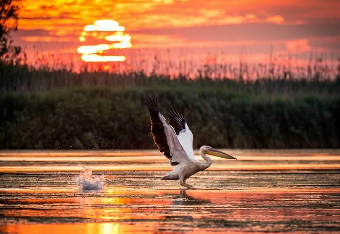 Danube Delta, Romania shutterstock_679370353.jpg