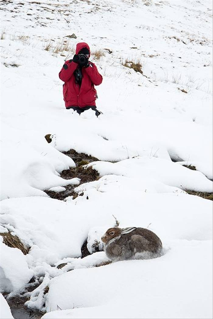 Photographing Mountain Hare (Robert Harvey)