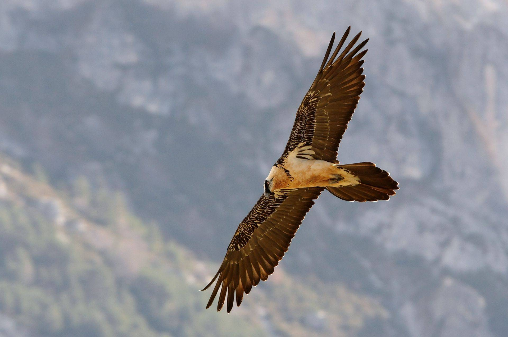 A Wildlife Festival In The French Pyrenees Naturetrek