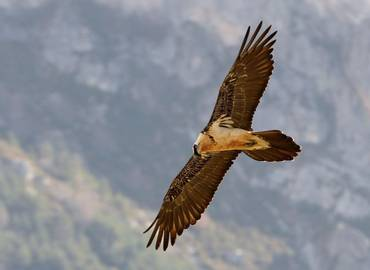 A Wildlife Festival in the French Pyrenees