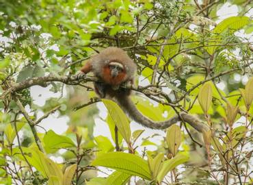 Colombia's Endemic Mammals