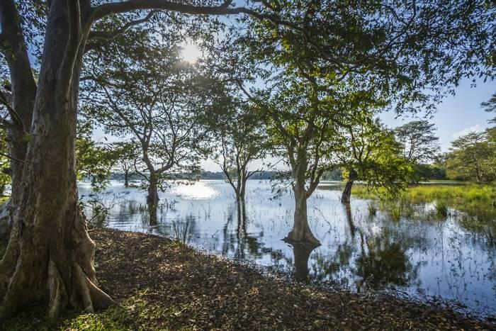 Minneriya Reservoir, Sri Lankashutterstock_544241950.jpg