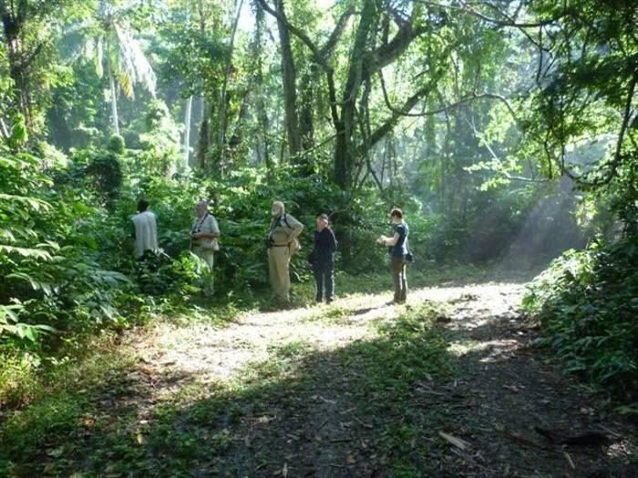 Birders in the  Green Castle rainforest